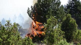 Горски пожар избухна в Кресненското дефиле