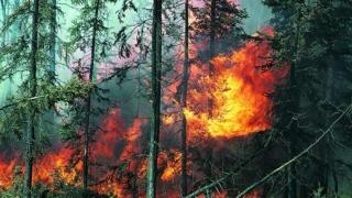Френските самолети отново гасят пожара в Рила