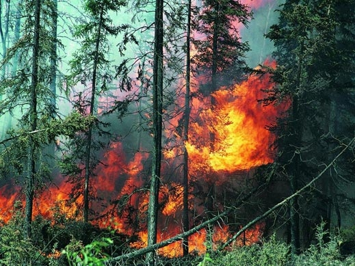 Голям пожар бушува в Карловско