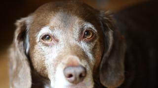 Отнеха кучето на мъжа от Горни Чифлик, който го влачи с колата си