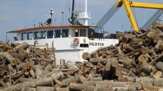 Осуетяват износа на 1900 тона трупи от ценна дървесина