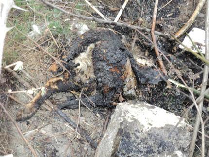 Жестоко убийство на куче втрещи пловдивчани