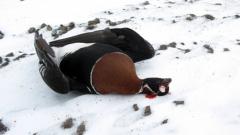Бракониери убиха рядък вид птица край Шабла