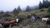 Трупове на крави край старозагорско село вдигнаха на крак БАБХ