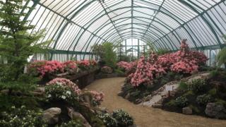 От WWF зоват да не се купуват цветя и неекологични подаръци за 8 март