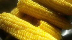 Над 50% е сривът в добива на царевица в повечето области у нас