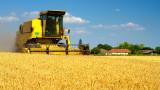 За първи път от 30 години Сърбия изнася зърно за Египет