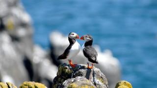 WWF зове правителствата за спешни действия за защита на видовете