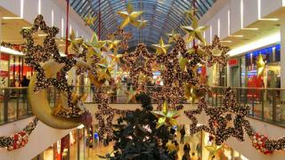 Български жилкови елхи на пазара за Коледа