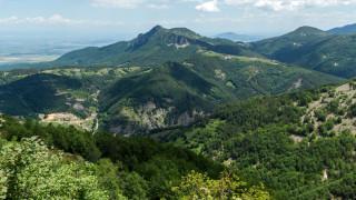 38% от територията на България са гори