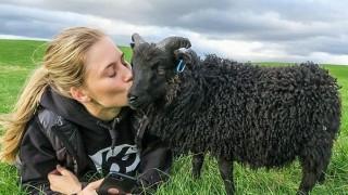 Най-известната овчарка в света