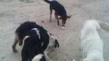 Търсят решение за бездомните кучета в Кюстендил
