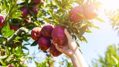 Микропластмасата вече е и в плодовете, и в зеленчуците
