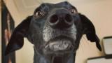 Кучето, което прилича на жираф