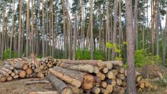 Разкриха незаконна сеч на 36 дървета от бял бор в Трън