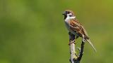 Катастрофален мор на птички във Франция заради пестицидите