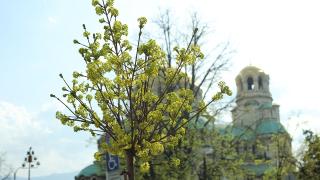 Общината мие около столичните черкви преди Великден