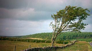 Габровски села без ток заради силен вятър