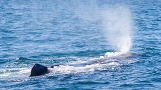 В Мексико спасиха 18-метров кит, заседнал в плитчина