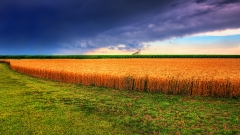 Ефектът от субсидирането: Площите със зърно намаляват, а пасищата растат