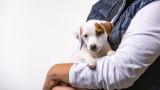 Защо обичаме кучетата, колкото и децата