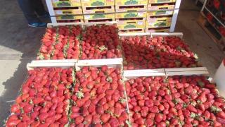 Данъчни влязоха в стоковата борса на плодове и зеленчуци в Първенец
