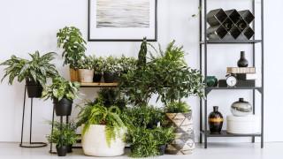Най-добрият начин за прочистване на въздуха вкъщи