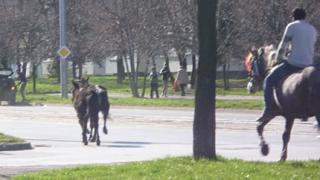 """Два дни коне волно си препускат по столичния """"Ал. Стамболийски"""""""