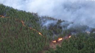 Започват проверки по горите заради опасност от летни пожари