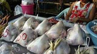 Момче почина от птичи грип в Тайланд