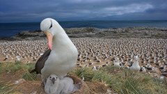 Дивата природа е в катастрофален упадък заради унищожение от човека