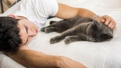 Разкриха защо все повече мъже осиновяват котки