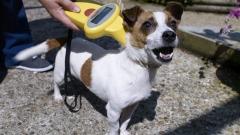 Внезапни проверки дали кучето е чипирано, започват в столичните градинки