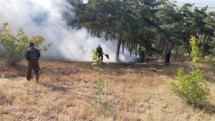 Голям горски пожар бушува край Свиленград