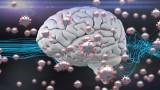 Последствията от COVID-19 за мозъка