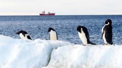 За рекордни температури в Антарктида съобщи ООН