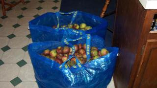 В Пазарджик насърчават използването на биоразградими торбички