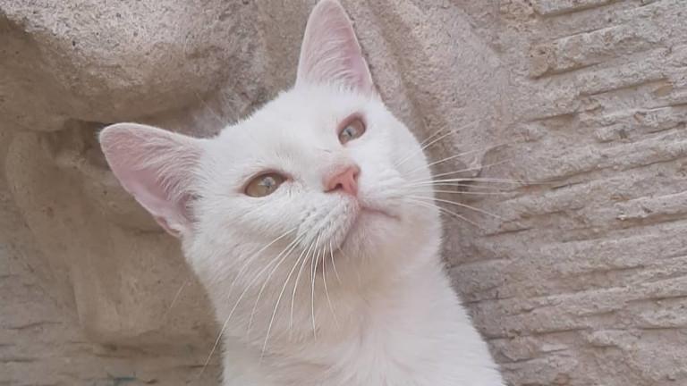 Няма никакво съмнение, че котките са умни животни, особено бездомните,