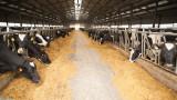В Швейцария се разтревожиха: Кравите станали твърде големи