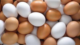 Стимулирайте мозъка си с яйца