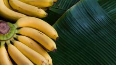За какво да използваме обелките от банани