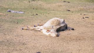 Причината за масовото измиране на животни