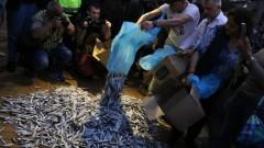 48-и ден: Протестиращите изсипаха риба пред Министерски съвет