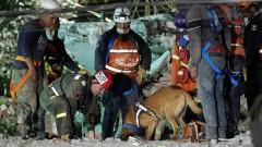 286 души са загинали при унищожителното земетресение в Мексико