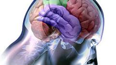 Ключът към килограмите е мозъкът