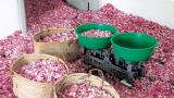 Предлагаме розовото масло да се включи в промоционалната политика на ЕС