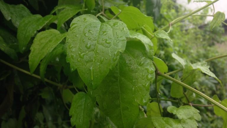 Хладно, ветровито и дъждовно на места