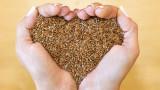 Лененото семе, ползите от него и как да го добавим към менюто си