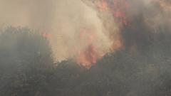 Осем часов пожар изпепели десетки декари край Враца