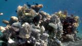 Как изглеждат подводните снимки, ако махнем водата